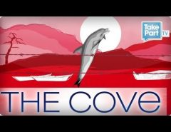 What is The Cove? - Support The Cove Dolphins and Stop Taiji Dolphin Killing